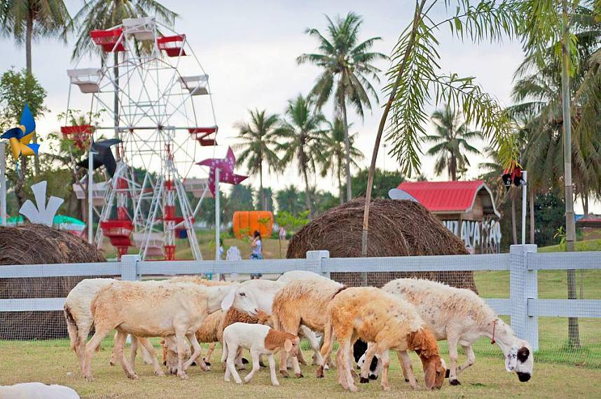 Pattaya Sheep Farm Banglamung has farm animals and playground for kids