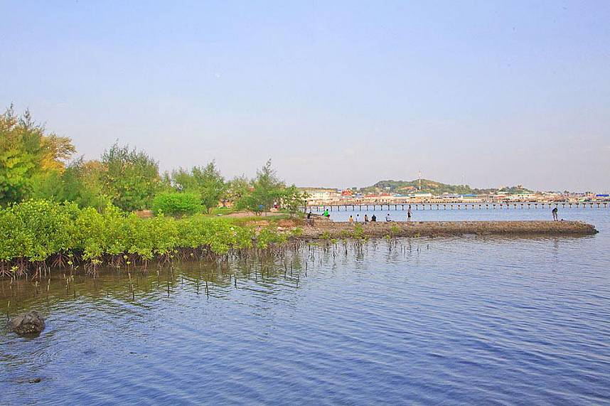 Some parts of Samaesarn Island Pattaya are covered with mangrove forest