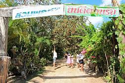 Экскурсии по фруктовым плантациям  Районга