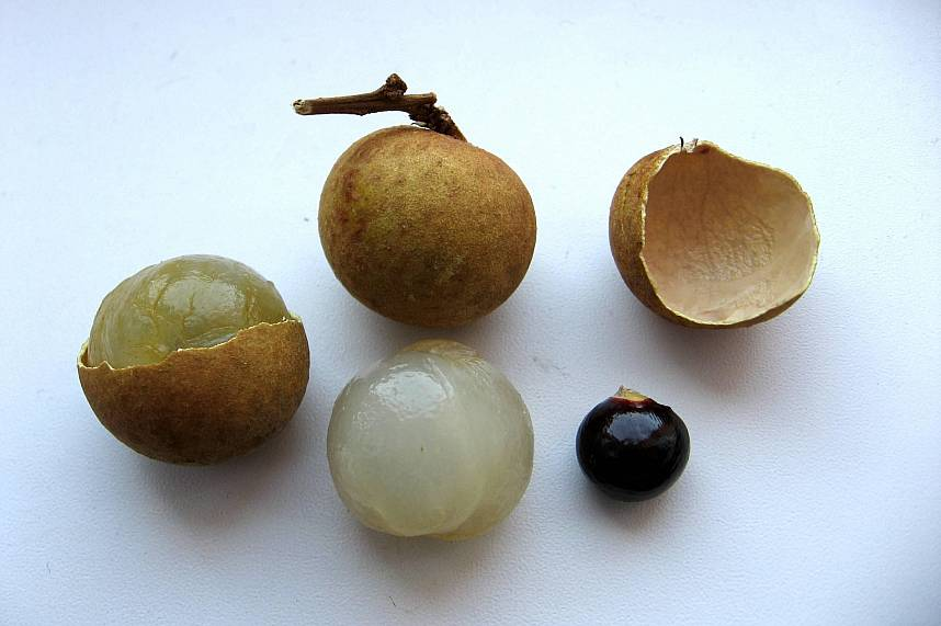 Longan is one of Thailands very sweet fruits and has a big seed