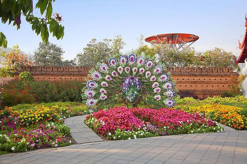 Astonishing flower arrangements like this peacock are shown at botanical garden Royal Flora Ratchapruek Chiang Mai