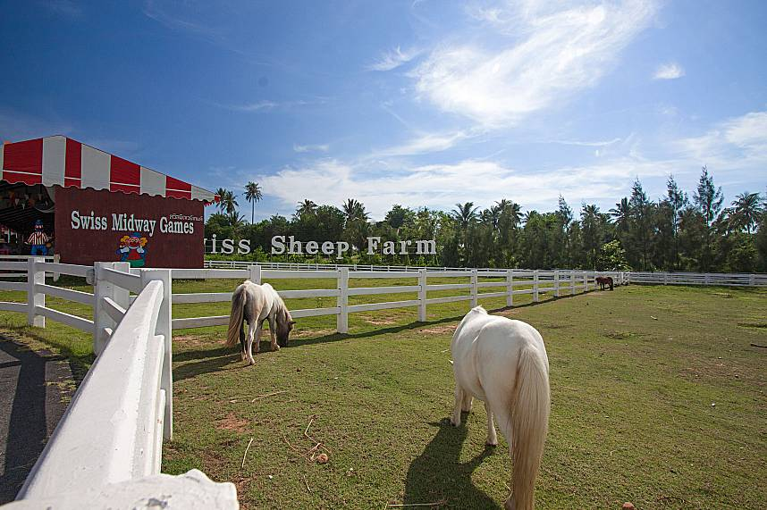 Some ponies are grazing at Swiss Sheep Farm in Pattaya
