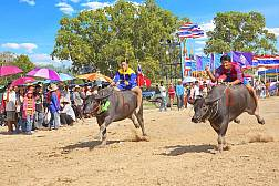 Chon Buri Büffelrennen