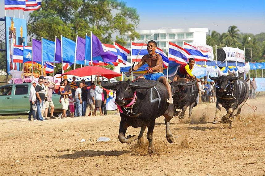 Chonburi Annual Buffalo Race Festival - a great family holiday experience