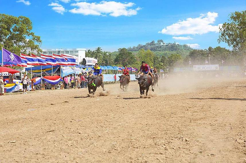 At full speed - enjoyment for the whole family at the Chonburi Annual Buffalo Race Festival