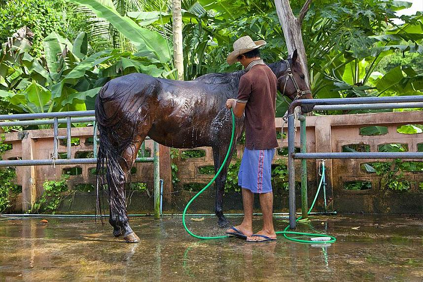 Water fun for horses and families at Horseshoe Point Pattaya