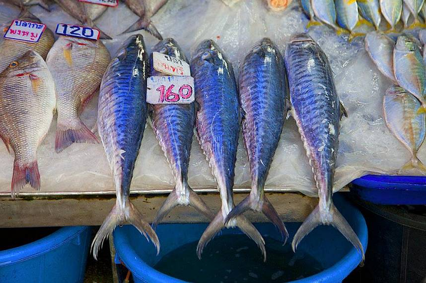 Ready for cook - get one for yourself at Naklua Fish Market North Pattaya