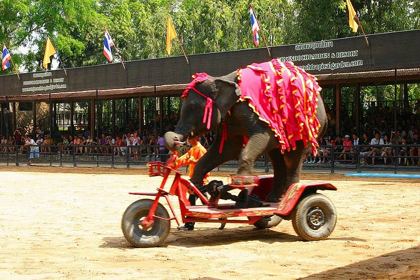 Fun for the elephant and visitors alike at Nong Nooch Gardens Pattaya