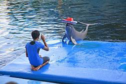 Шоу дельфинов под открытым небом в Паттайе