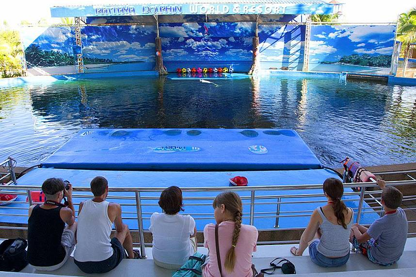 Top family holiday attraction at Dolphin World Pattaya