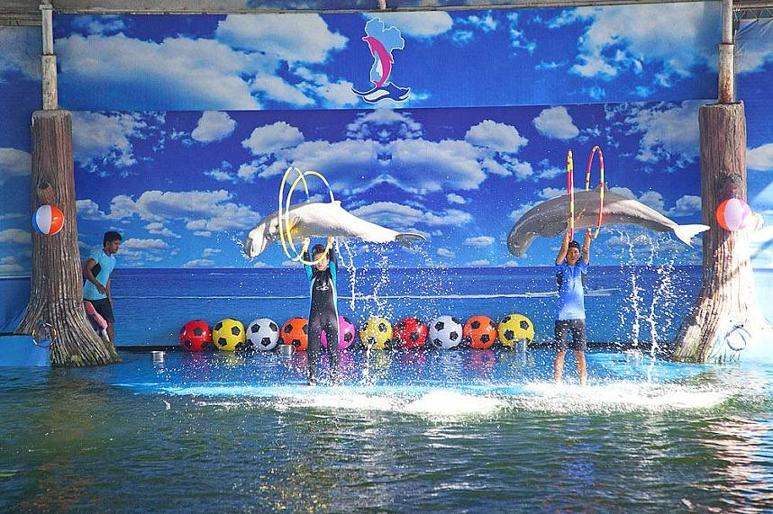 Irrawaddy dolphins show their talent at Dolphin World Pattaya