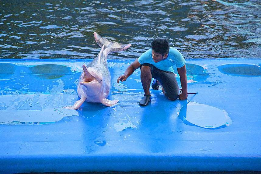 Hello my dear visitors at Dolphin World Pattaya