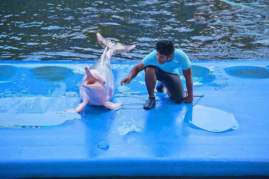 Hello my dear visitors at Dolphin World Pattaya