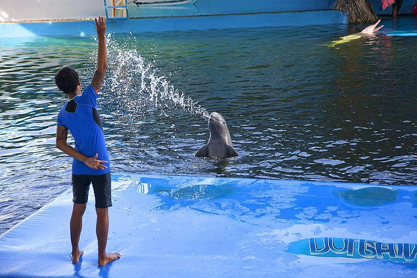 Water fun at its best at Dolphin World Pattaya