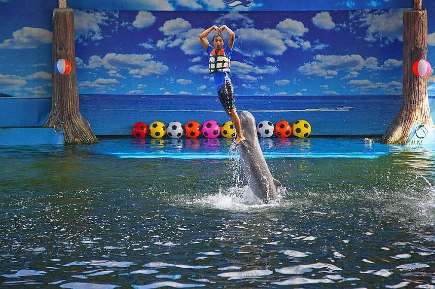 Amazing show at Dolphin World Pattaya