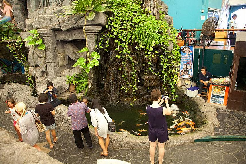 Carp aquarium at Underwater World Pattaya