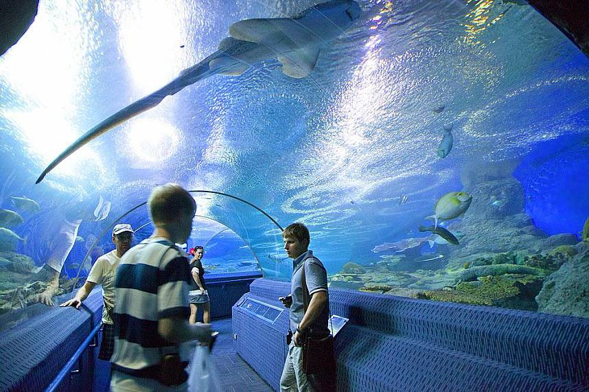 See the sea life at Underwater World Pattaya