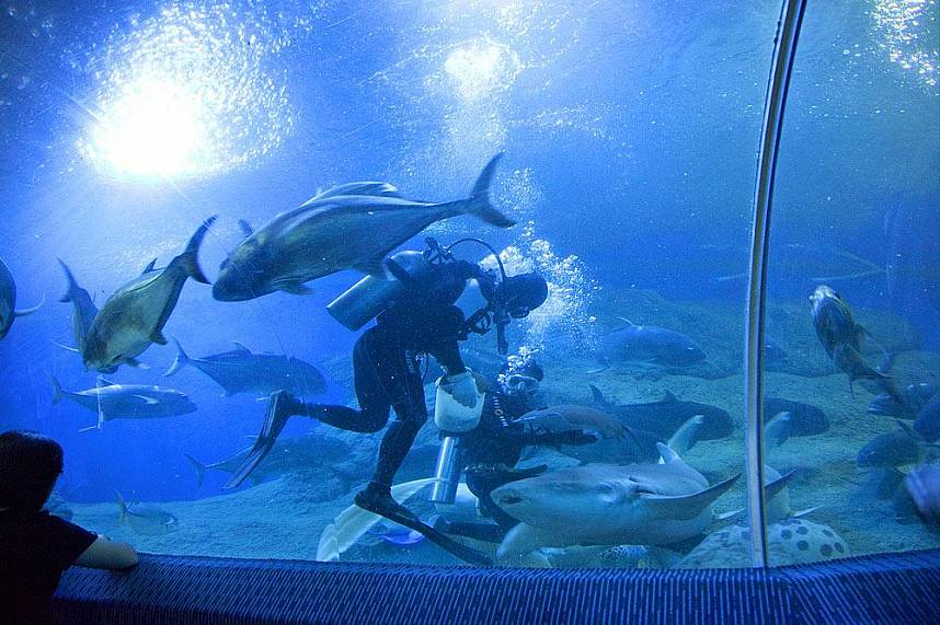 Big fish feeding at Underwater World Pattaya