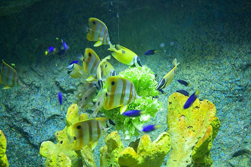 Colorful fish at Underwater World Pattaya