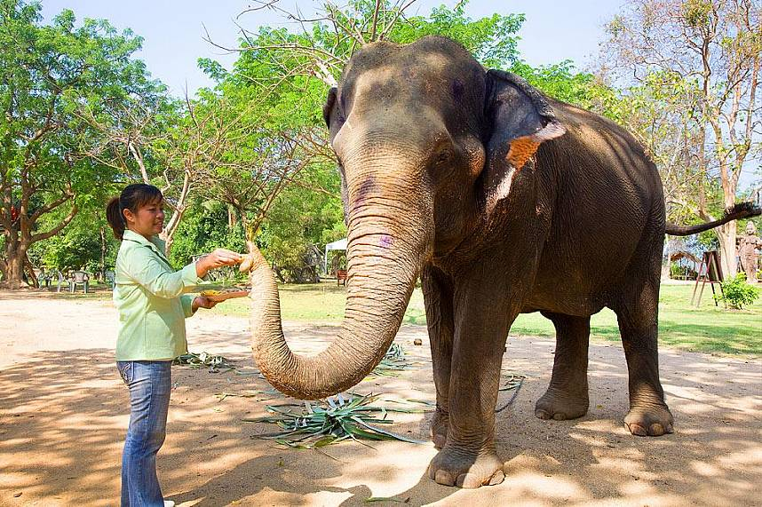 Elephant encounter at the The Sanctuary of Truth in Pattaya