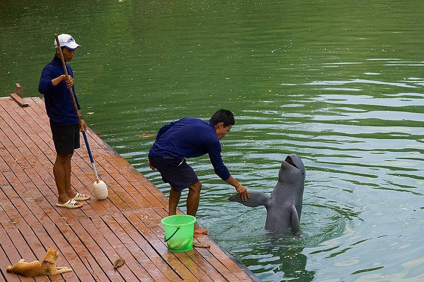 Hello from an Irrawaddy dophin at The Sanctuary of Truth Pattaya