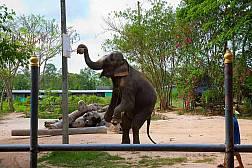 Pattaya Elefantendorf