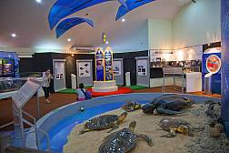 Pattaya Sea Turtle Conservation Center