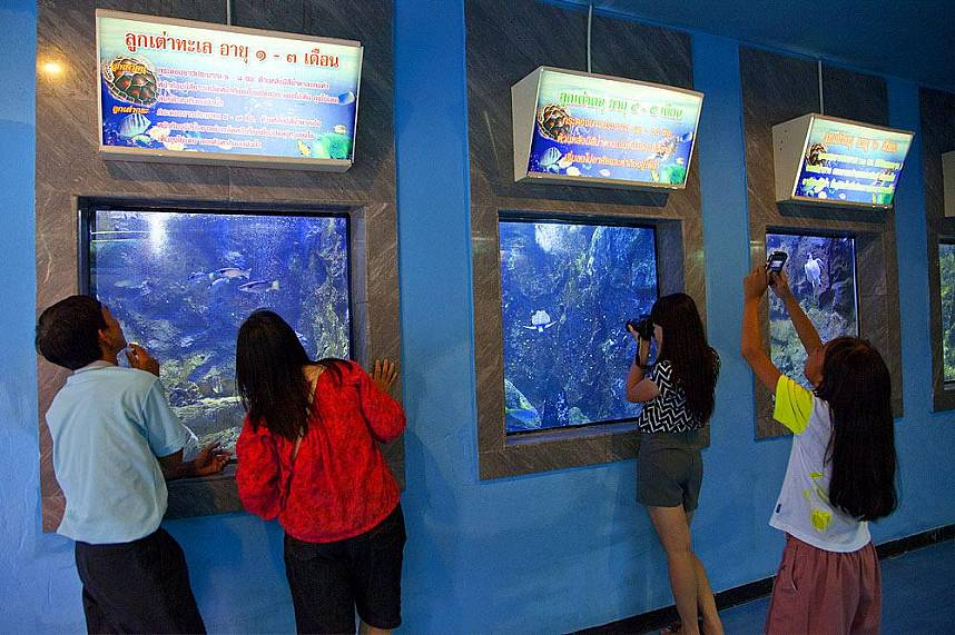 Visit during your Thailand holiday the Pattaya Sea Turtle Conservation Center