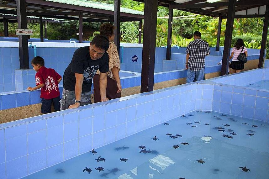 Pattaya Sea Turtle Conservation Center - a fun day for the whole family