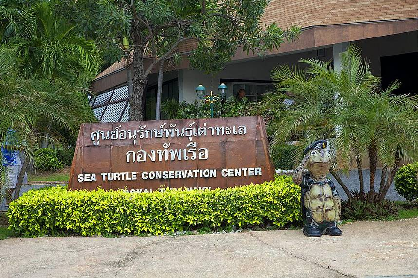 Pattaya Sea Turtle Conservation Center - ideal for a family excursion during a Pattaya holiday