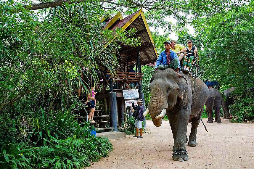 Elephant Village Pattaya welcomes you for a great day