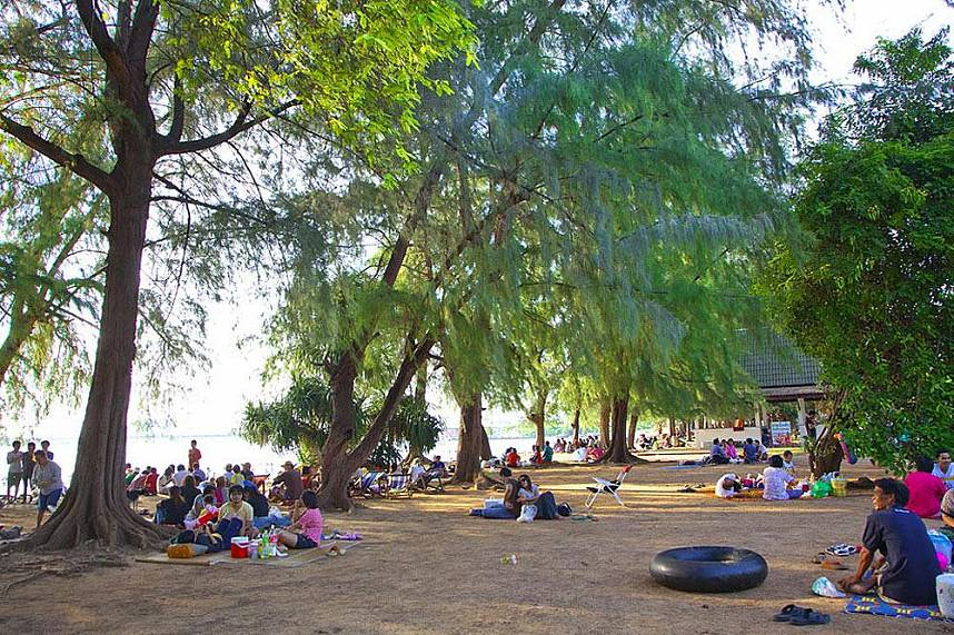 Huge trees along Nang Rum Beach Sattahip provide shade