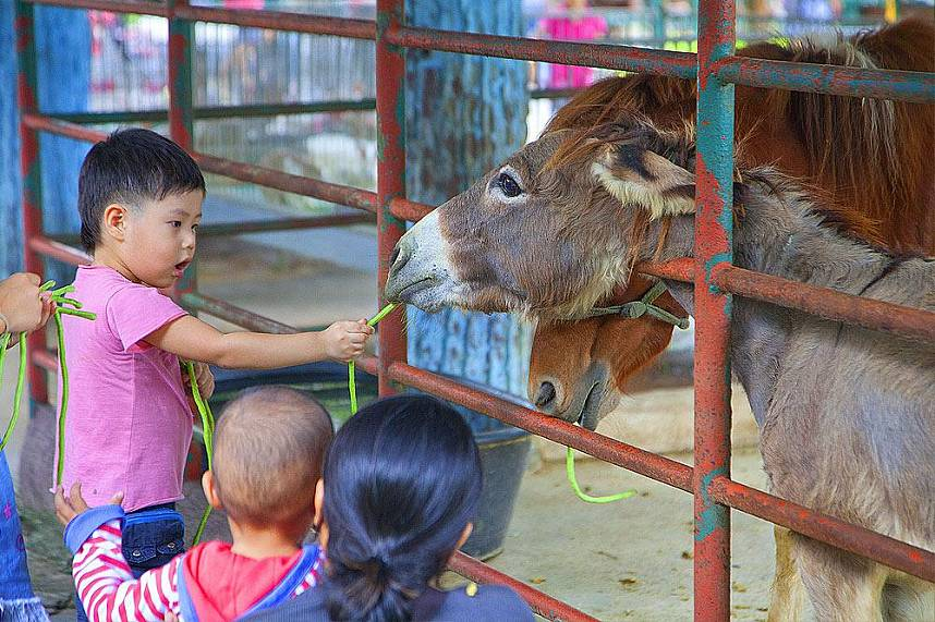 Have a break from busy Pattaya and spend a day with your kids at Sriracha Tiger Zoo Pattaya