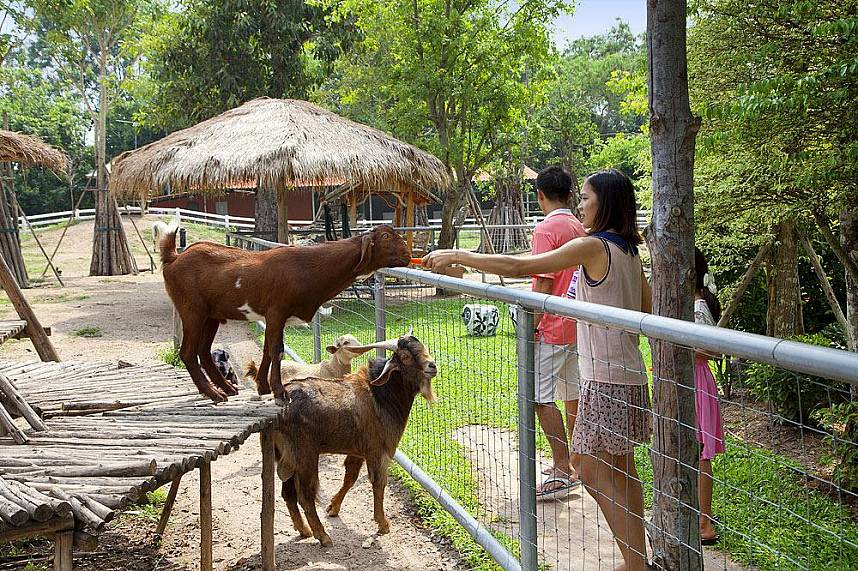 Wonder Farm South Pattaya is a great place for families