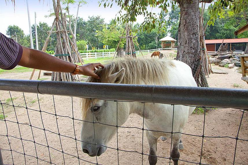 A fantastic Pattaya family attraction is Wonder Farm South Pattaya
