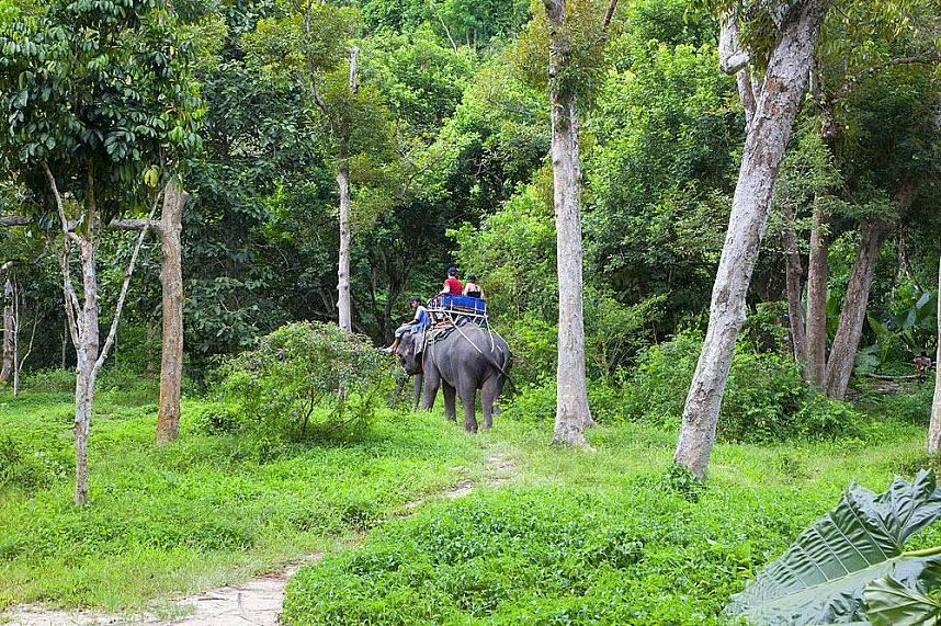 Explore the wild side of Koh Samui at Na Muang Waterfall