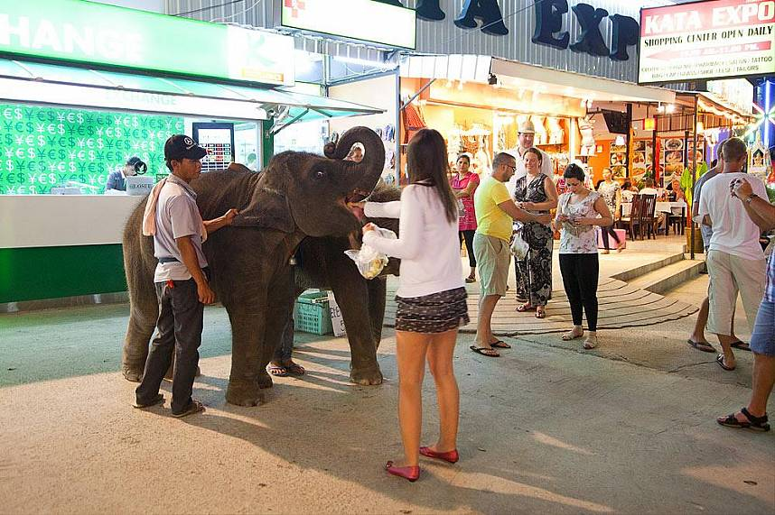 During an evening stroll along Kata Beach Phuket you can feed some baby elephants