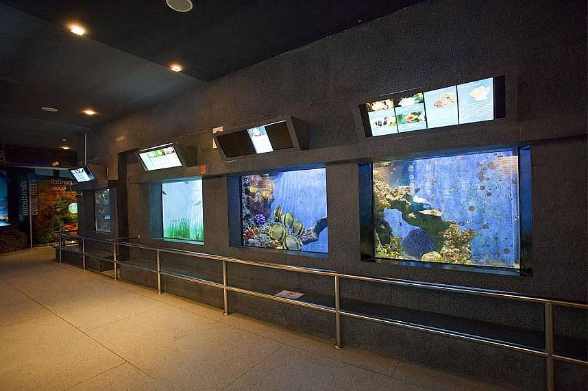 Phuket Aquarium is a must visit attraction for every Phuket tourist