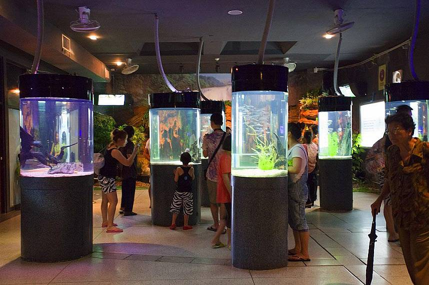 Superb displays of marine life at Phuket Aquarium