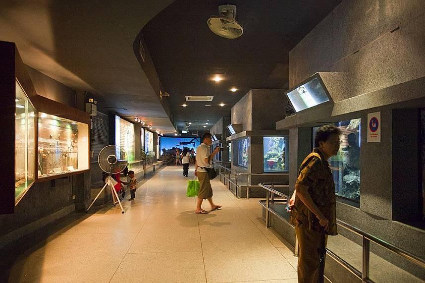 Do not miss out the fantastic Phuket Aquarium