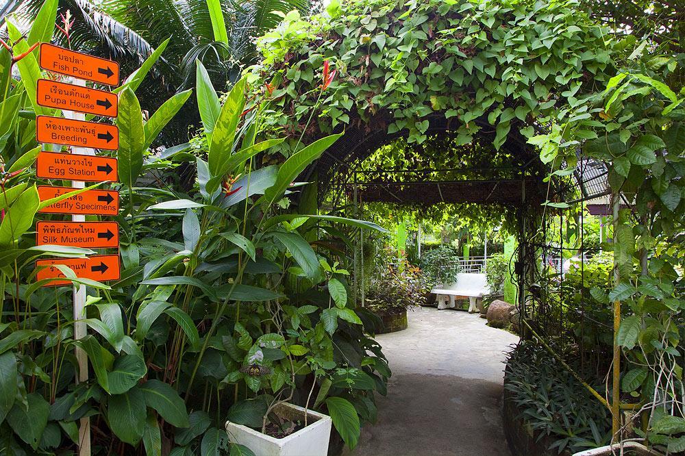 Monarch Erfly Garden Raise Monarchs Gardening