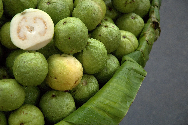 Guava Fruit Thailand