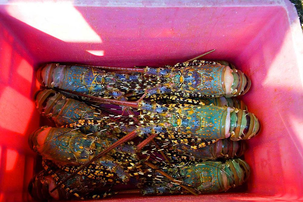 Fish Market Pattaya